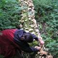 Wild Tarragon Oysters