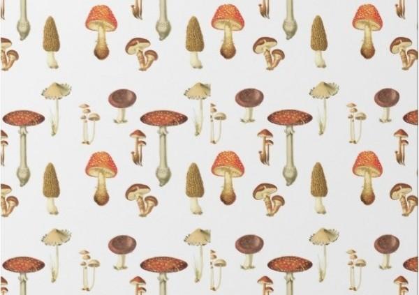 Quality Gourmet Mushroom Growing - Spawn, Kits & Supplies Direct
