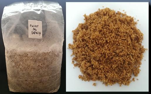 sawdust spawn