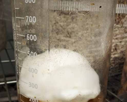 Mycelium Snow Ball